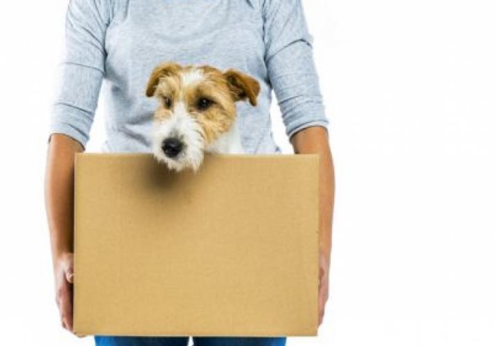 Защо да изберете BGspeditor.com за транспорт на домашен любимец?